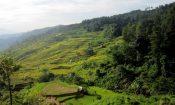 desa wisata malasari terasering