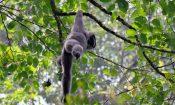 wisata halimun dunia binatang monyet
